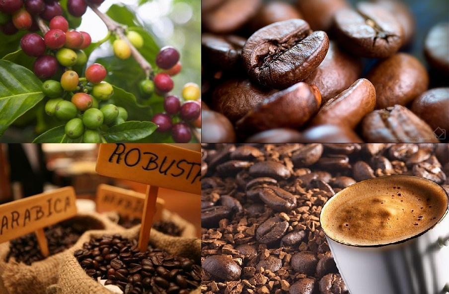 khả năng xuất khẩu cà phê sang thị trường Trung Đông